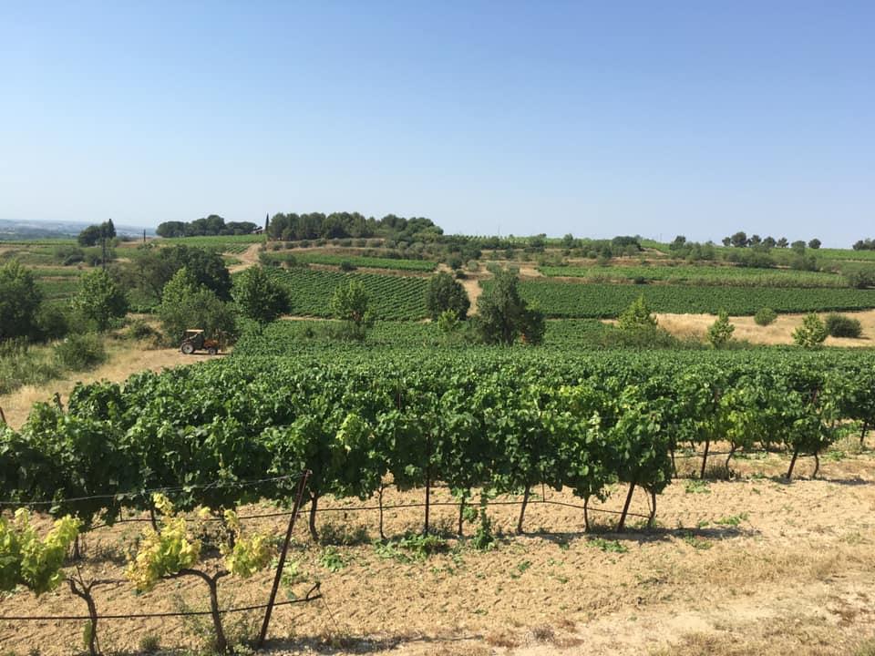 vendanges-bouteille_vigneron-producteur-vins-rugby-vigne-degustation-cuvee-chardonnay-grenache-syrah-viognier-merlot-pressoir-apero12