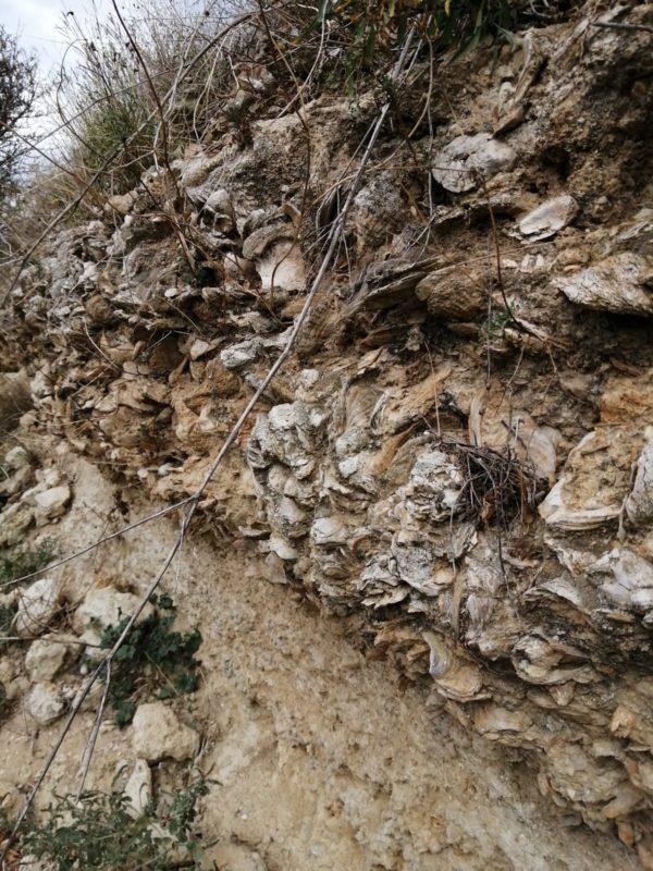 le mur de fossile au cauquillas