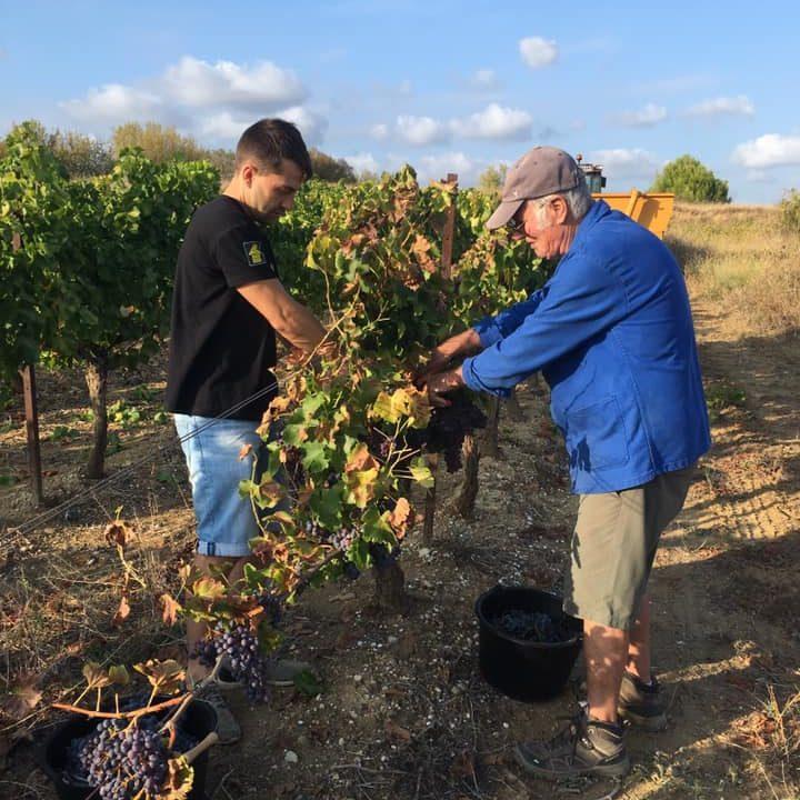 vendanges-bouteille_vigneron-producteur-vins-rugby-vigne-degustation-cuvee-chardonnay-grenache-syrah-viognier-merlot-pressoir-apero08